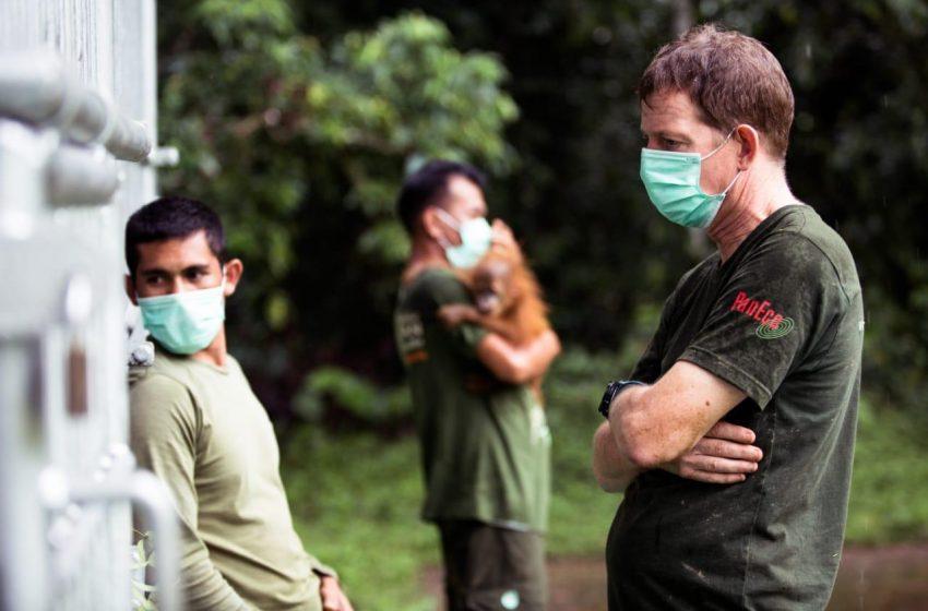 Kerajaan Inggris Raya Anugerahi gelar kepada Pelestari Orangutan Sumatera